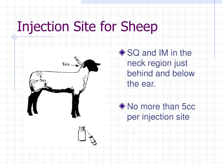 Injection Site for Sheep