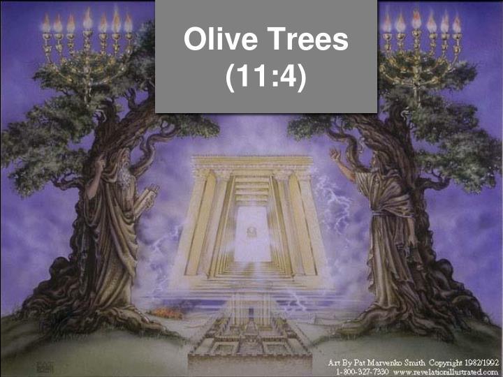 Olive Trees (11:4)