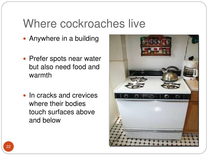 Where cockroaches live