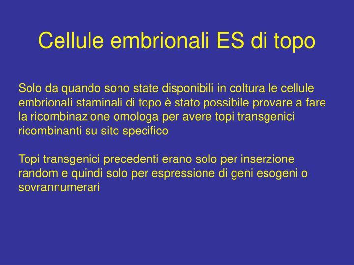 Cellule embrionali ES di topo