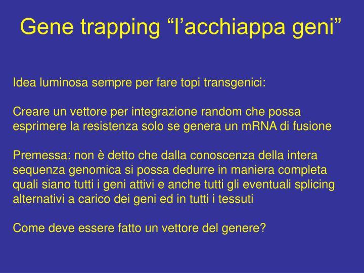 """Gene trapping """"l'acchiappa geni"""""""