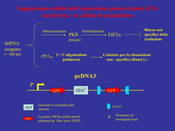 Soppressione stabile dell'espressione genica tramite