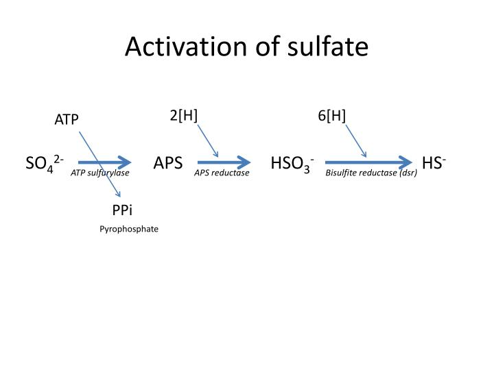 Activation of sulfate