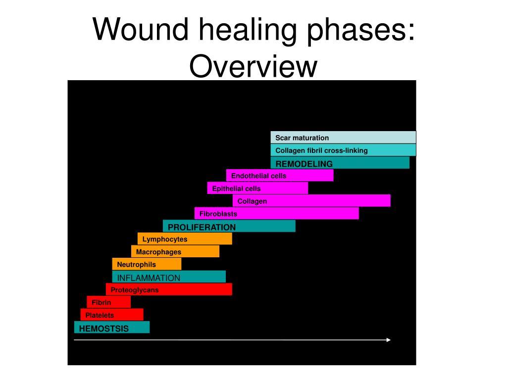 Normal Wound Healing