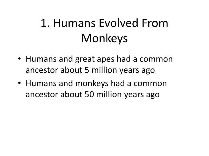 1. Humans Evolved From Monkeys