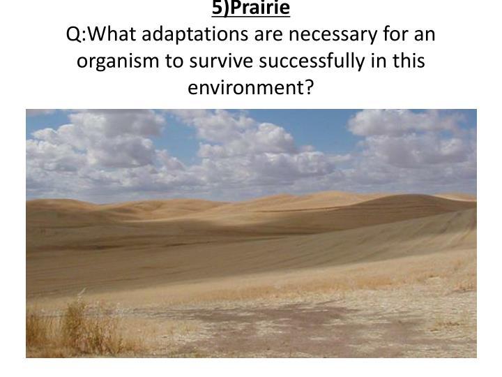 5)Prairie