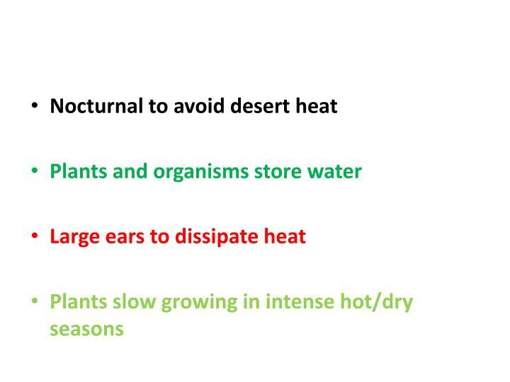 Nocturnal to avoid desert heat