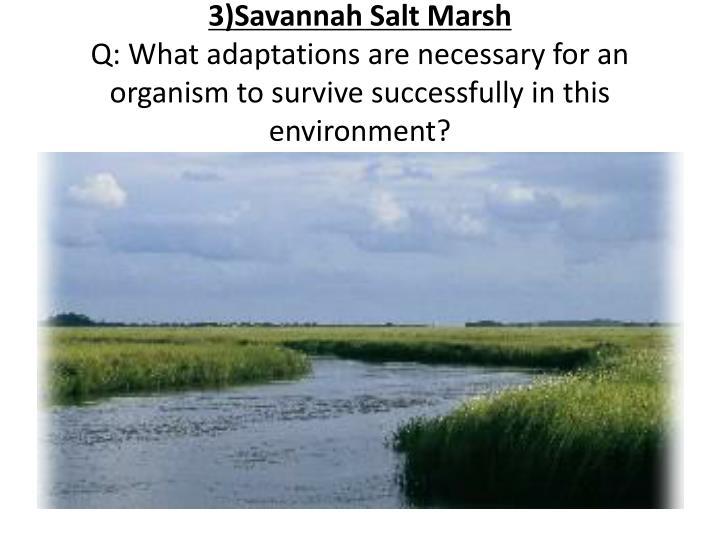 3)Savannah Salt Marsh