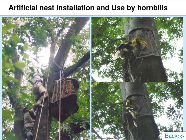 Artificial nest installation and Use by hornbills