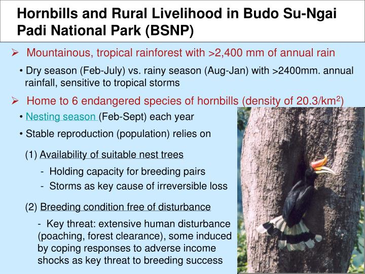 Hornbills and Rural Livelihood in Budo Su-Ngai
