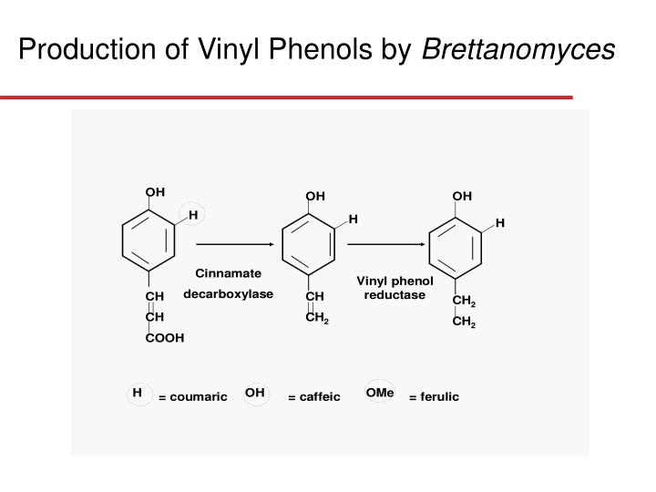 Production of Vinyl Phenols by