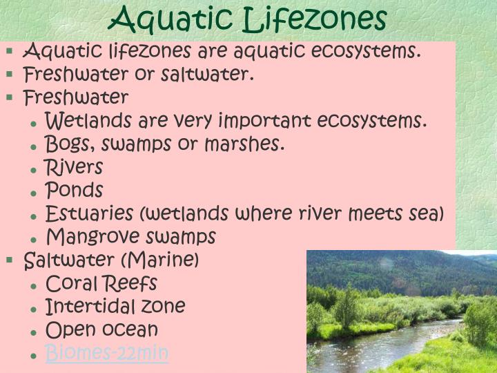 Aquatic Lifezones
