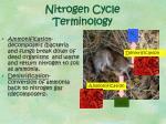 nitrogen cycle terminology1