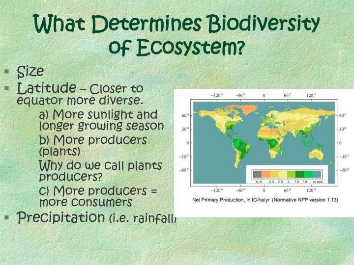 What Determines Biodiversity of Ecosystem?