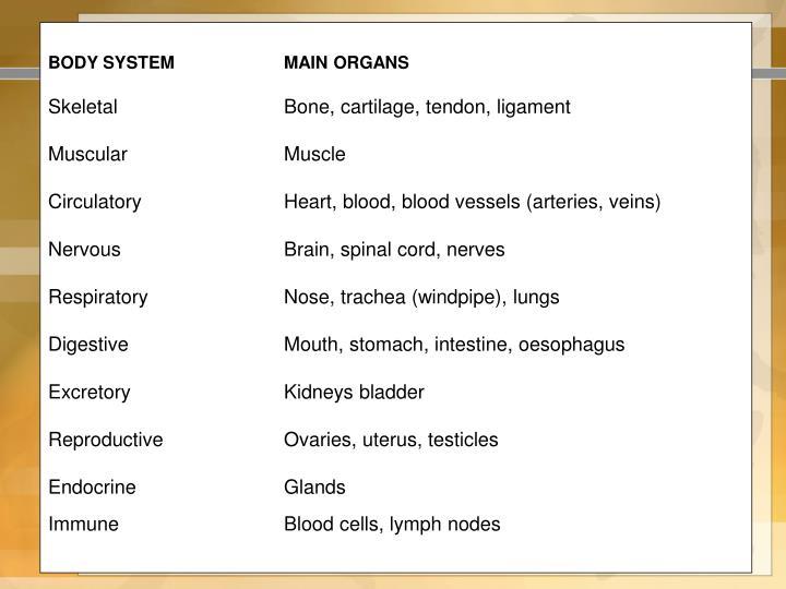 BODY SYSTEMMAIN ORGANS