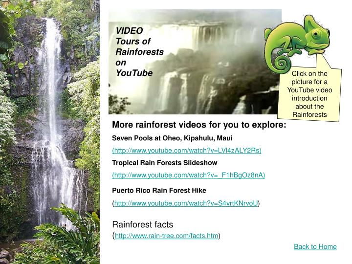 VIDEO Tours of Rainforests on YouTube