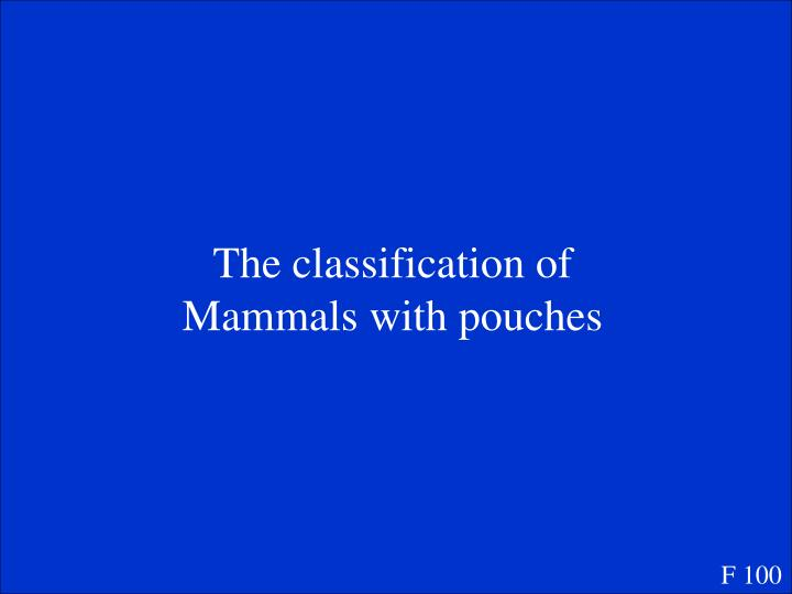 The classification of Mammals with pouches
