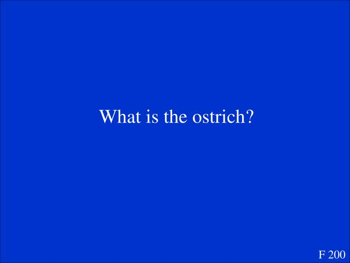 What is the ostrich?