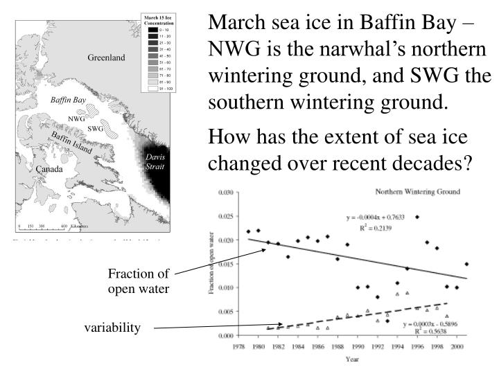 March sea ice in Baffin Bay – NWG is the narwhal's northern wintering ground, and SWG the southern wintering ground.