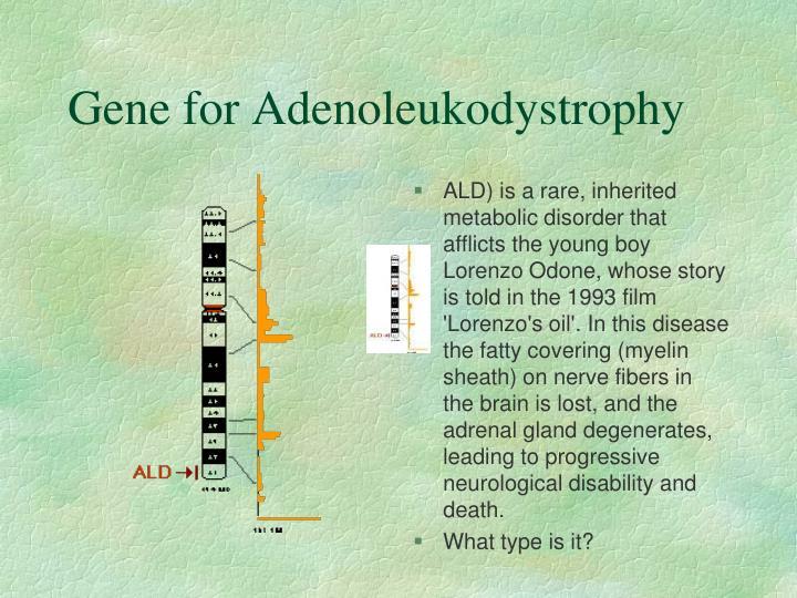 Gene for Adenoleukodystrophy