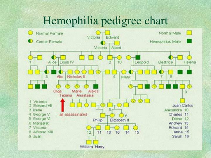 Hemophilia pedigree chart
