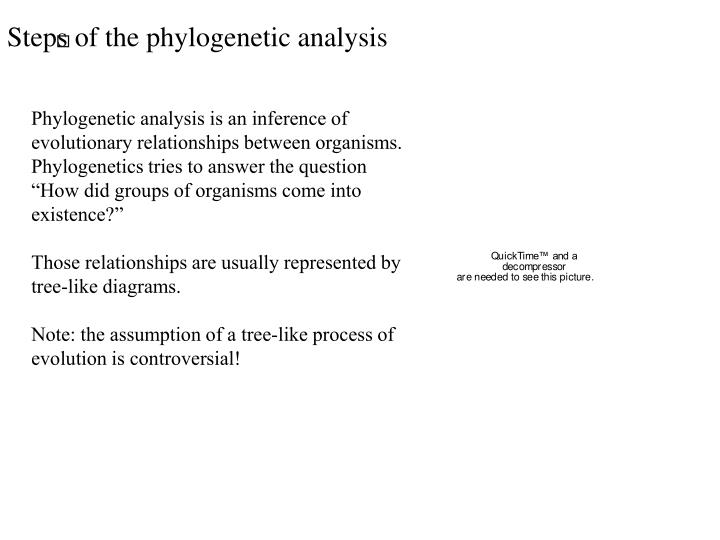Steps of the phylogenetic analysis