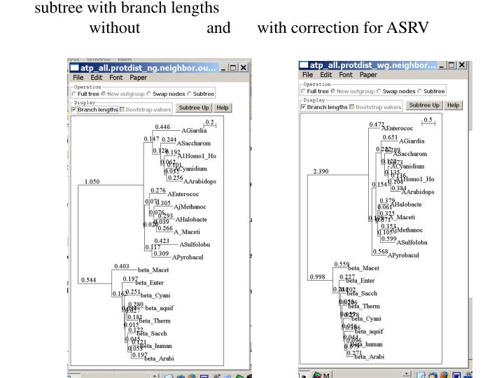 subtree with branch lengths