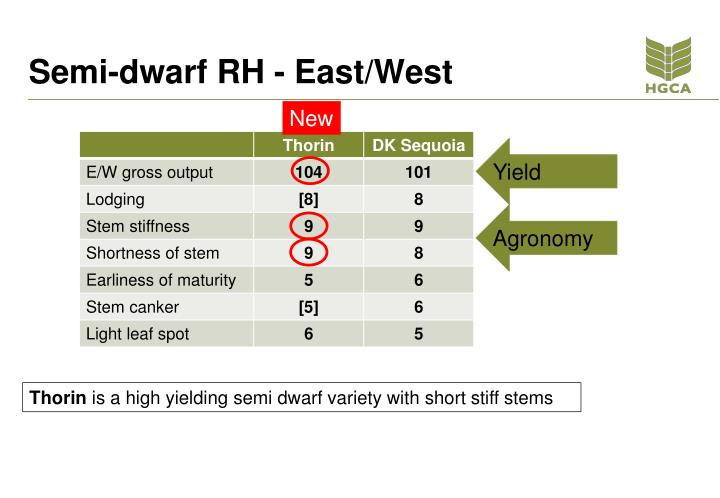 Semi-dwarf RH - East/West