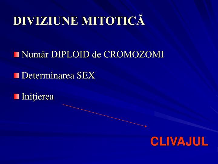 DIVIZIUNE MITOTICĂ