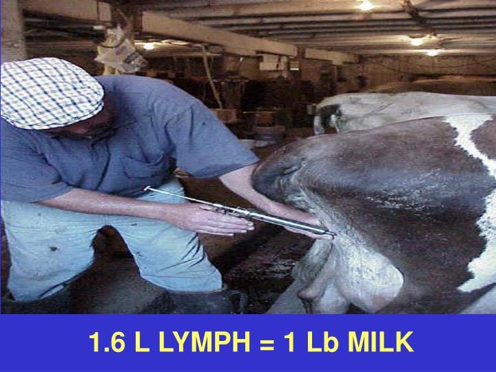 1.6 L LYMPH