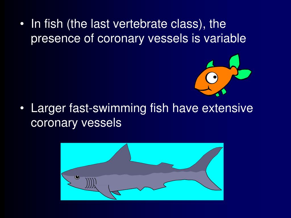 In fish (the last vertebrate class), the presence of coronary vessels is variable