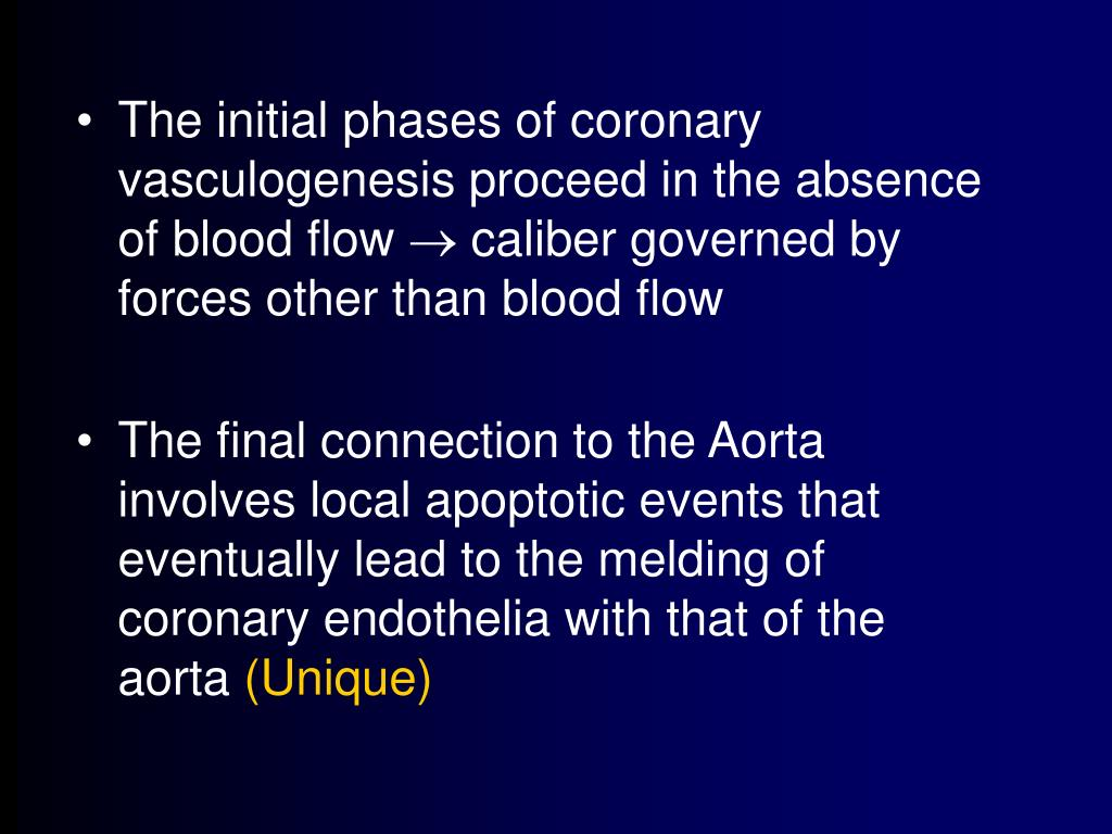 The initial phases of coronary vasculogenesis proceed in the absence of blood flow