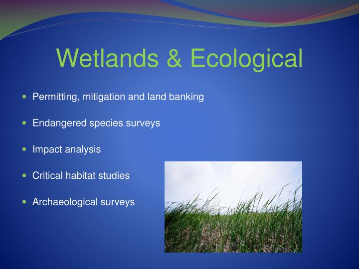 Wetlands & Ecological