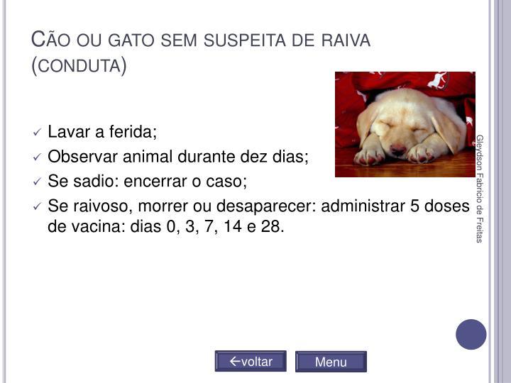Cão ou gato sem suspeita de raiva (conduta)