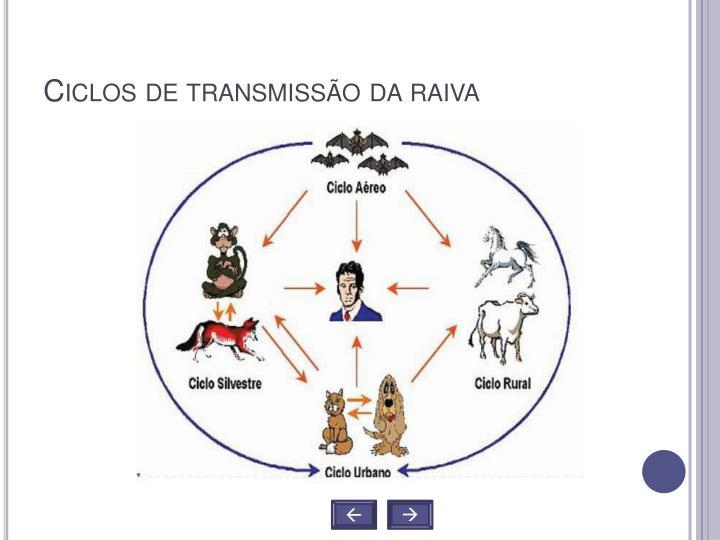 Ciclos de transmissão da raiva