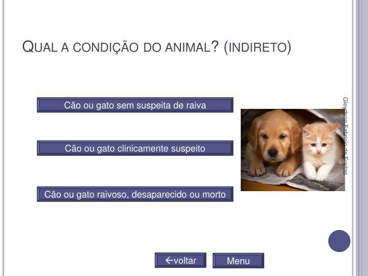 Qual a condição do animal? (indireto)