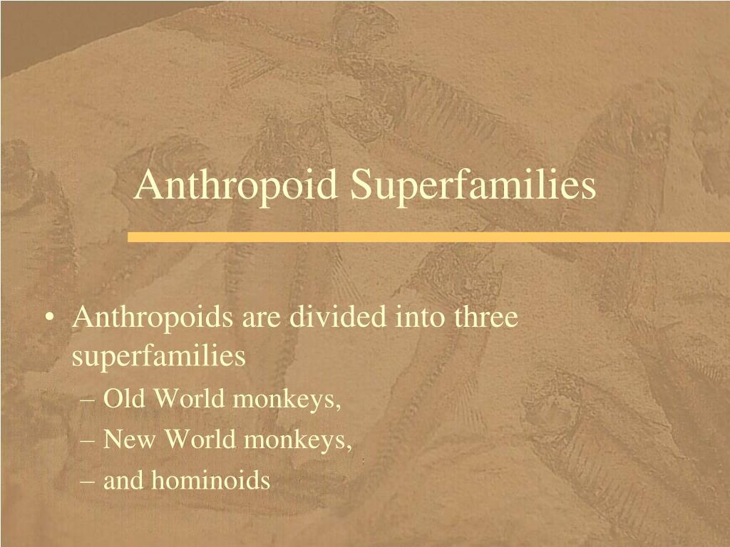 Anthropoid Superfamilies