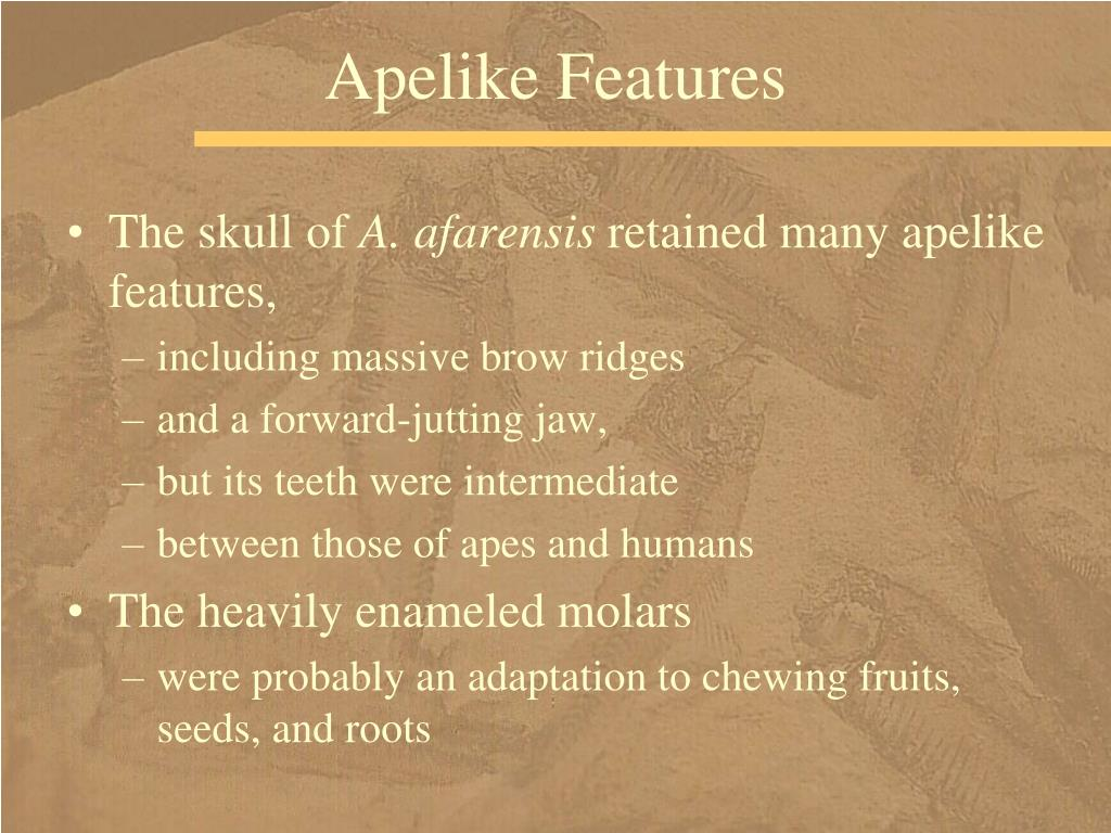 Apelike Features
