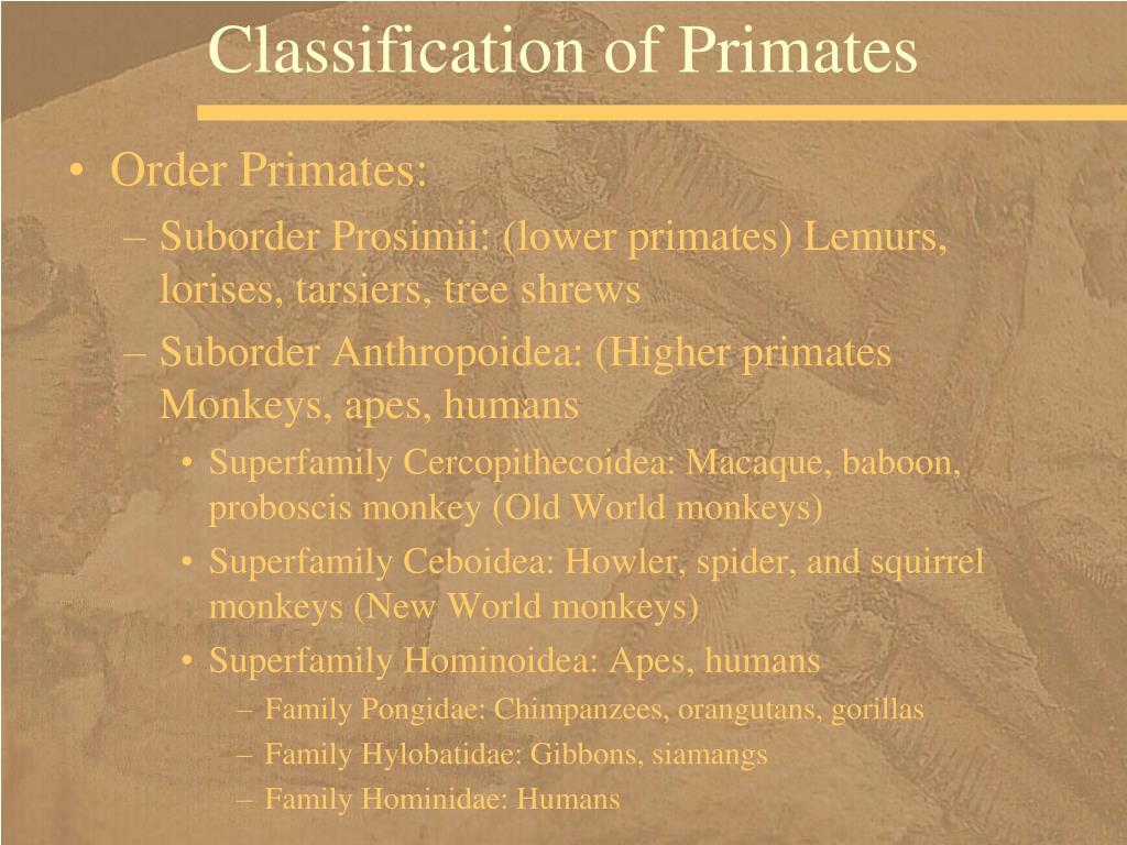 Classification of Primates
