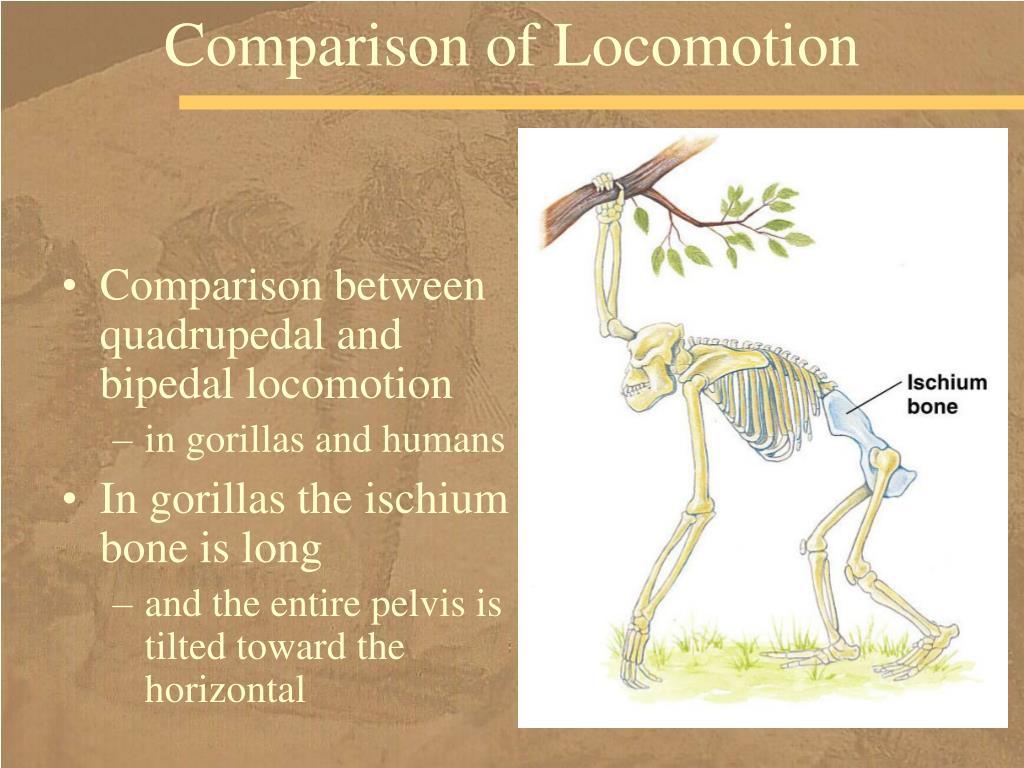 Comparison of Locomotion