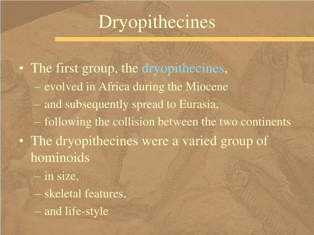 Dryopithecines