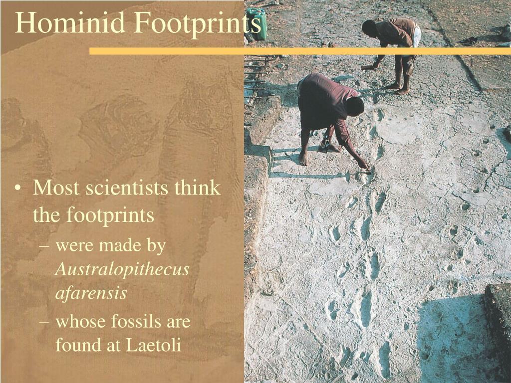 Hominid Footprints
