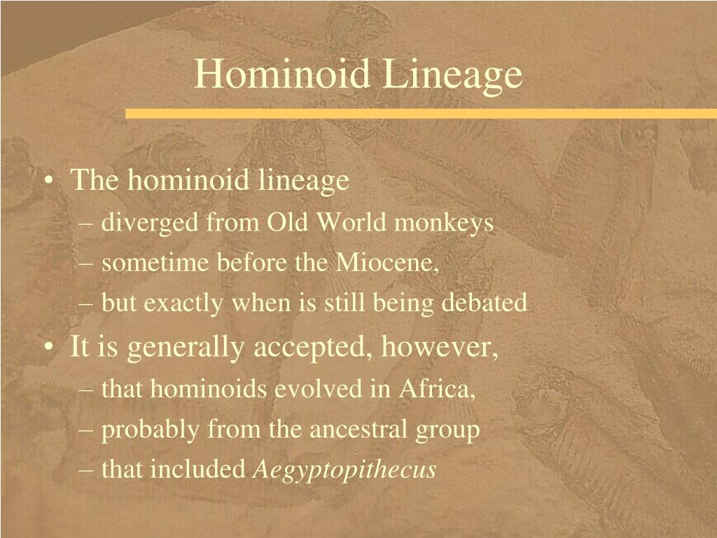 Hominoid Lineage