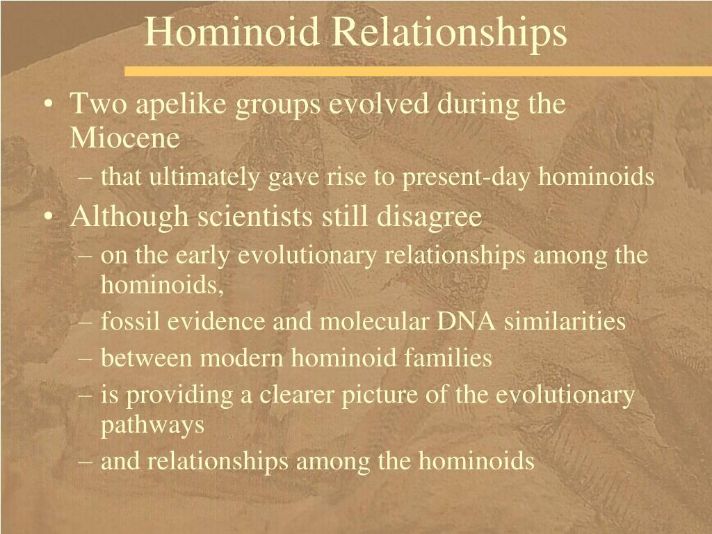 Hominoid Relationships