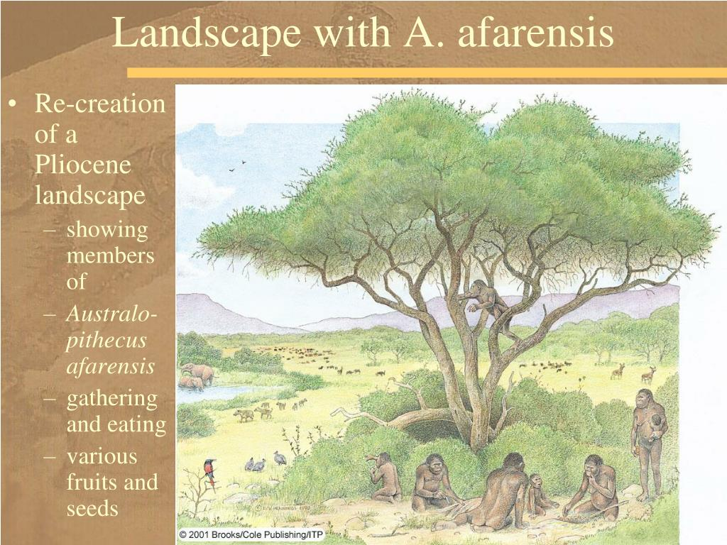 Landscape with A. afarensis