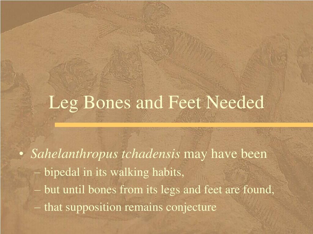 Leg Bones and Feet Needed