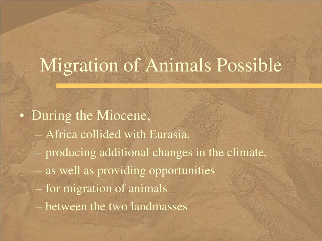 Migration of Animals Possible
