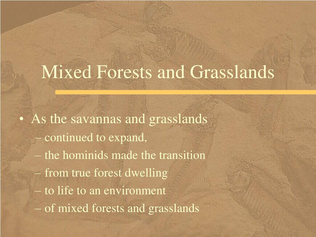 Mixed Forests and Grasslands