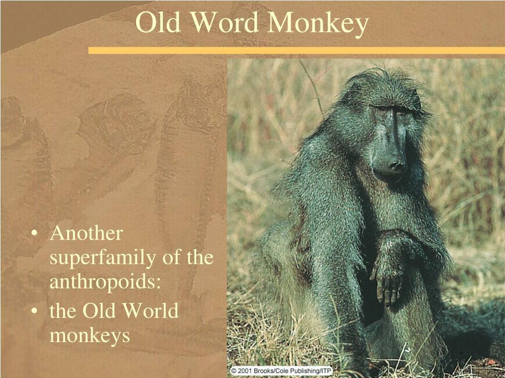 Old Word Monkey