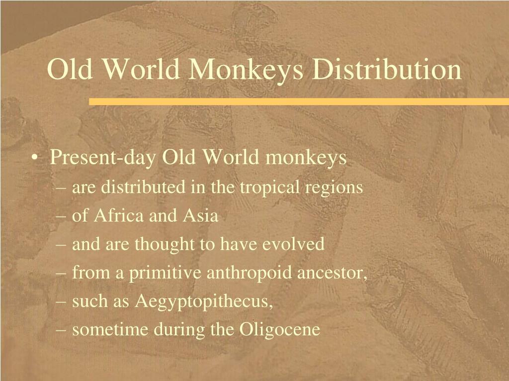 Old World Monkeys Distribution